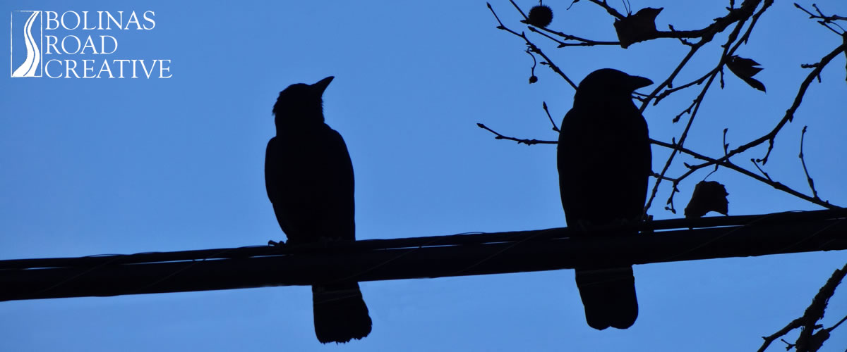 Two crows sit on a wire. One is providing consultation.